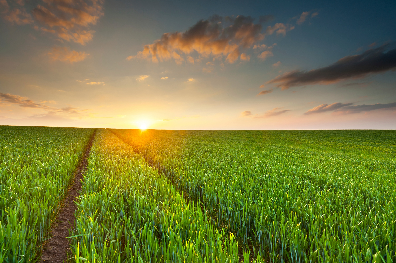 Sunset-illuminates-a-green-crop-field-000020440825_Large.jpg